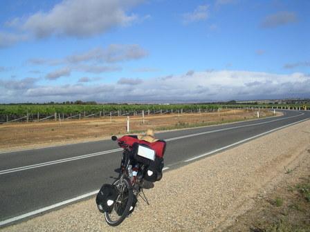 21.01.2007 - Des vignes à perte de vue. Direction Wellington.
