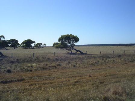25.01.2007 - Les arbres poussent dans le sens du vent !!!