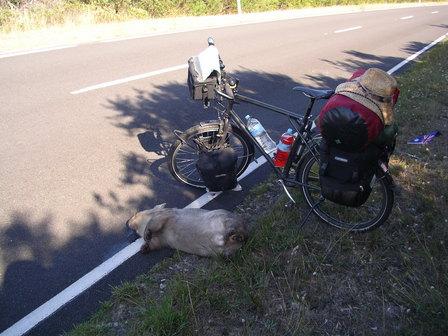 26.01.2007 - Ce wombat n'a pas eu de chance...