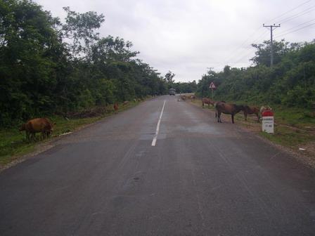 27.06.2006 - La route est aussi aux animaux...