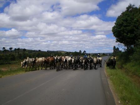 07.03.2007 - Troupeau de zébus sur la RN7. Direction Antsirabe.