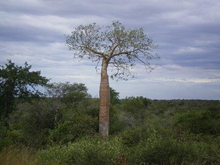17.03.2007 - Mon premier baobab. Direction Toliara.
