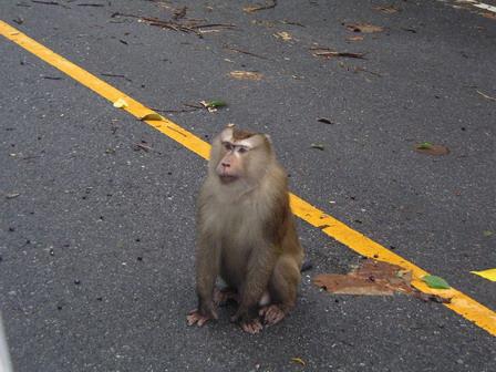 22.05.2006. Thaïlande. Khao Yai National Parc